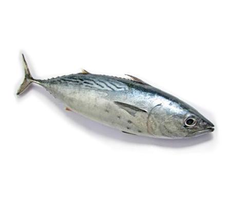 Buy fish online buy fresh fish online kochi for Where to buy fish online