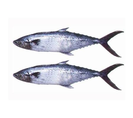Buy Fish Online   Buy Fresh Fish- Online Kochi